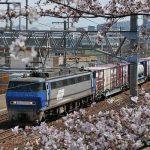 桜と貨物列車(バッテラバード)