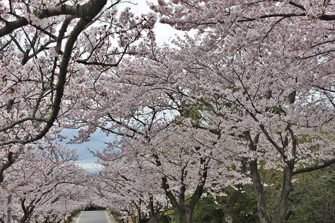 花曇りの並木道(梨依)3