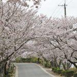 花曇りの並木道(梨依)