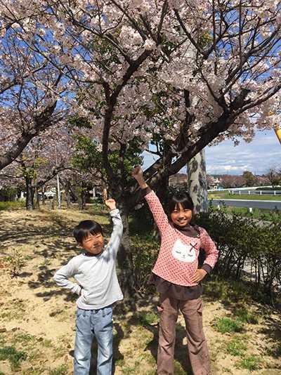 初めての明石の桜(chinen)3