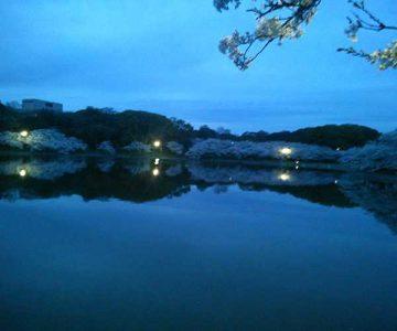 湖面に映る桜(ベル)