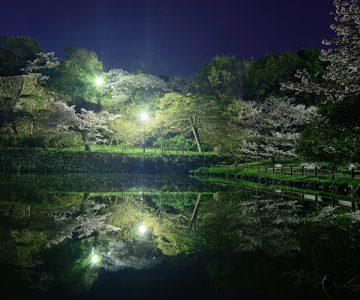 明石公園の夜桜(めぐぱぱ)