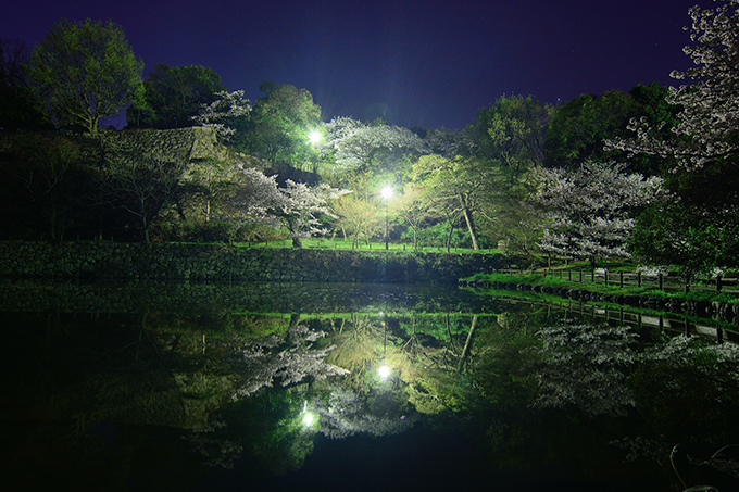 明石公園の夜桜(めぐぱぱ)1
