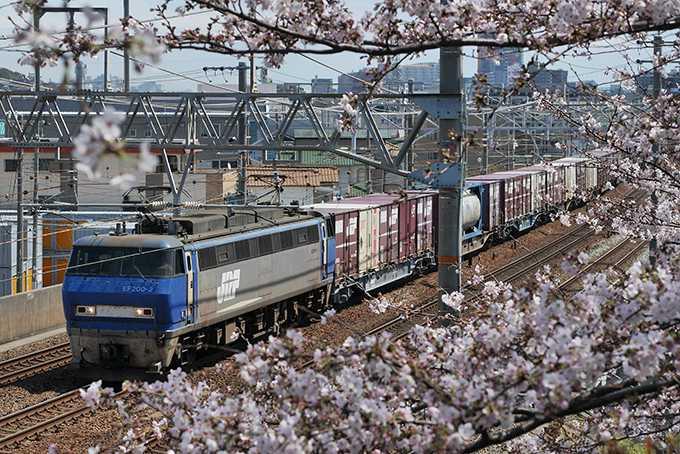 桜と貨物列車(バッテラバード)1