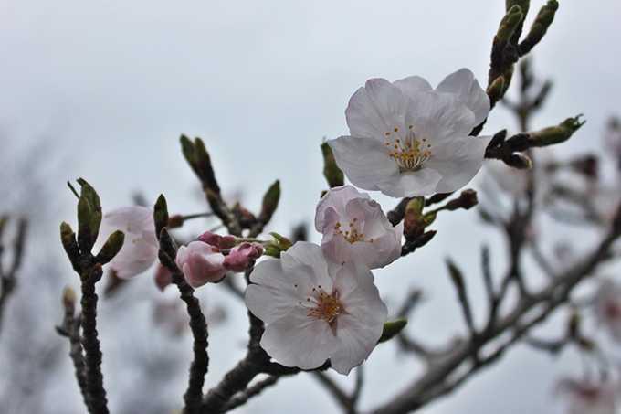花曇りの並木道(梨依)2