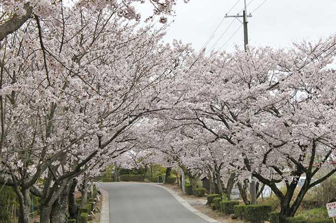 花曇りの並木道(梨依)1