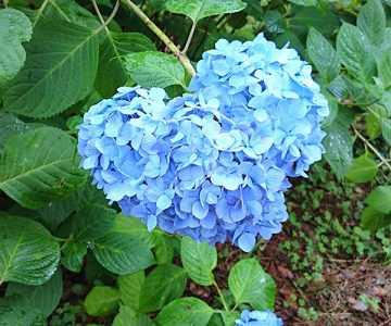 ブルーハート(ひゃくごじゅう)