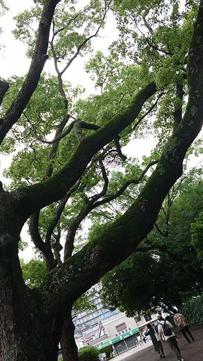 雨上がりの午後(くみっぺ)3