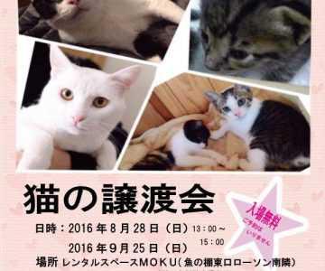 猫の譲渡会動物と共生するまちづくりの会
