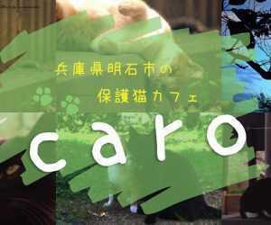 保護猫カフェカーロ