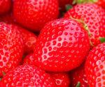 際立つ甘さ♪明石特産「清水いちご」をリサーチ!清水いちごの収穫体験も